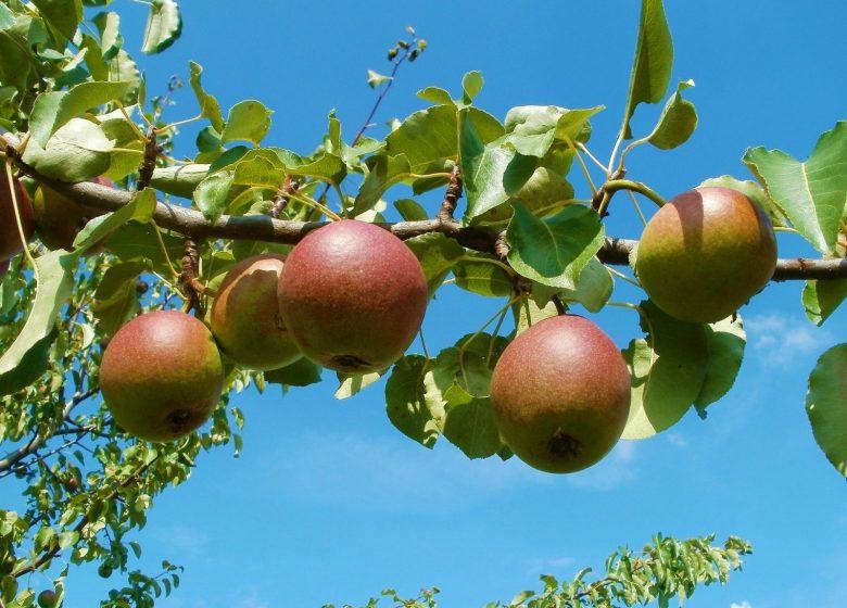 530652_apple-837694_1920