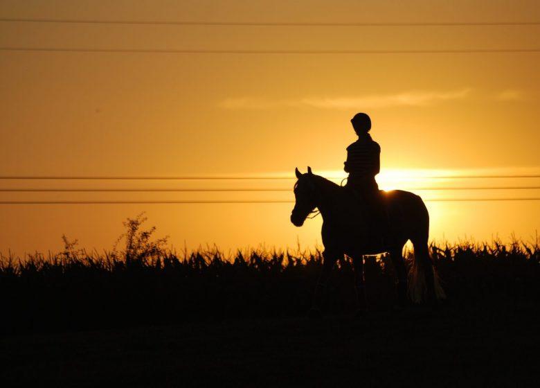 530837_horseback-riding-1576108_1920